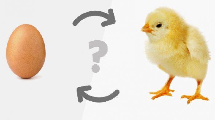 Duluan Ayam Atau Telur? Ini Faktanya!